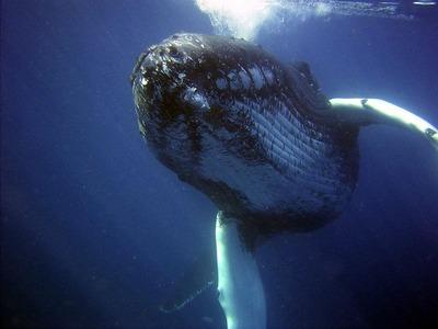 IT情報つめこみ速報|調査捕鯨中止命令