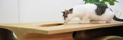 IT情報つめこみ速報|猫机3design-cat-table