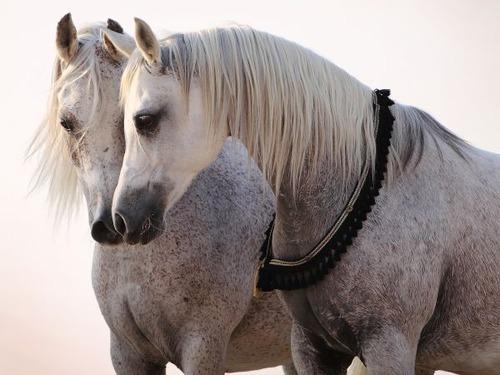 horses-communication-expression-01_600x450
