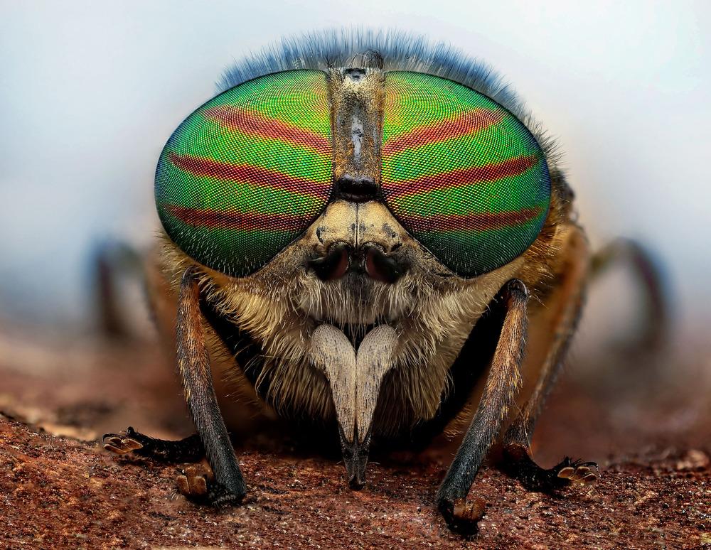 Bug-eyed_pixanews-1