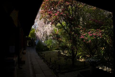 8M8A4623 - 2014-04-15 15-15-31