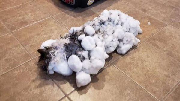 【USA】瀕死で発見の「冷凍ねこ」、無事解凍  モンタナ州