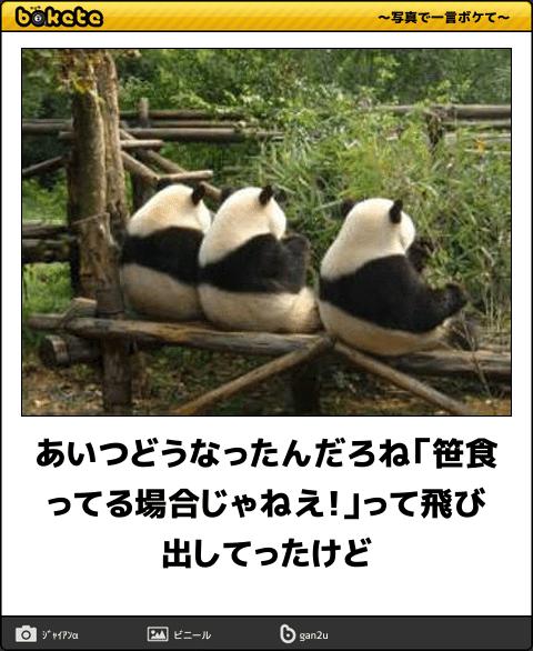 【マジかよ】パンダが笹しか食わなくなった理由が酷い・・・