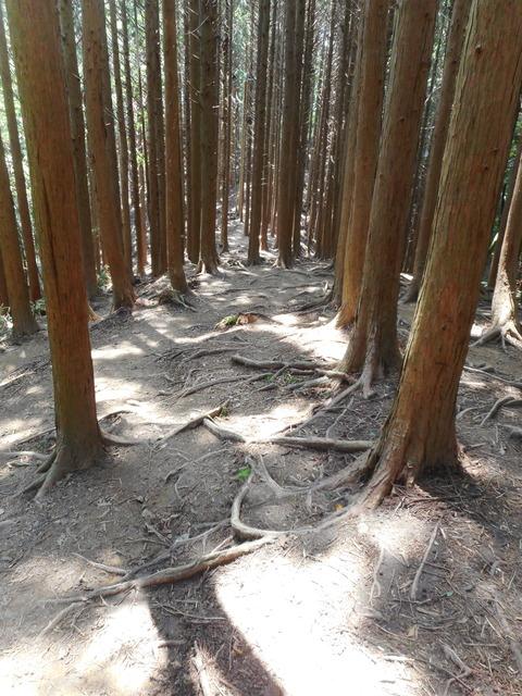 文殊尾の登山道