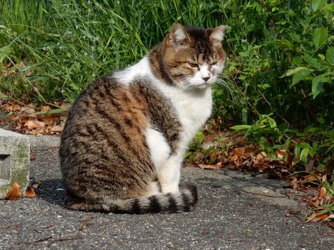 DSCN5791 猫14-13