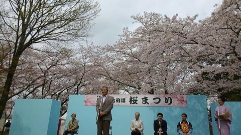 桜まつり⑧