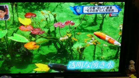 モネの池⑨