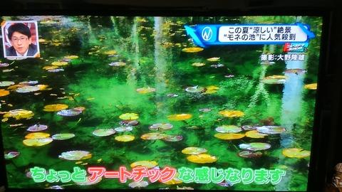 モネの池④