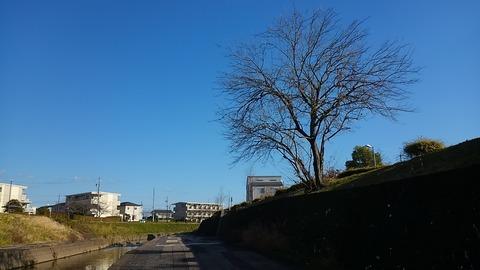 枯れ木一本④