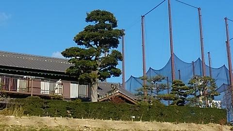 ふくらしばの木のある家⑩