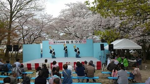 桜まつり➄