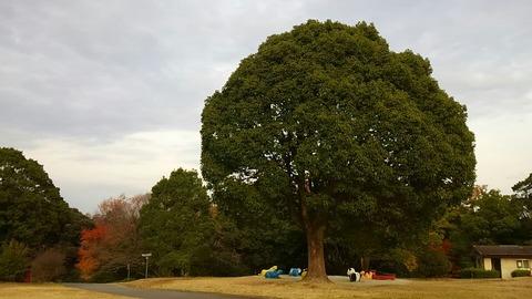 29年11月27日森林公園③
