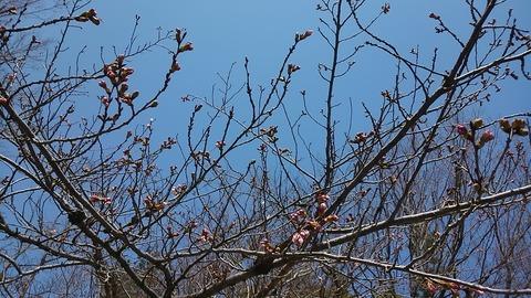 29年古戦場桜まつり⑰