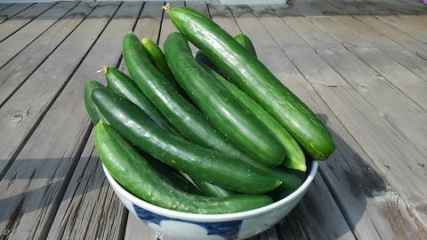 29年7月23日夏野菜①