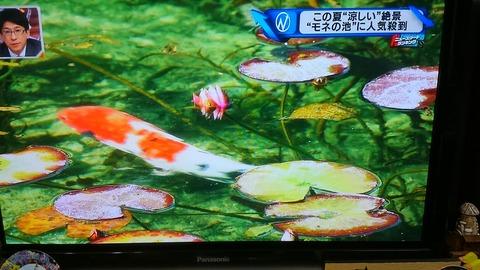 モネの池②