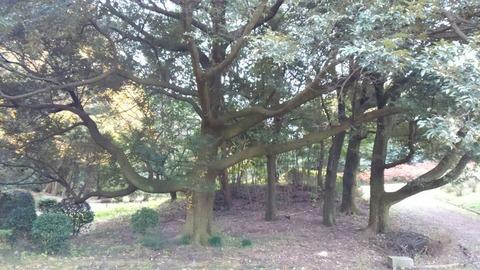 29年11月27日森林公園⑥