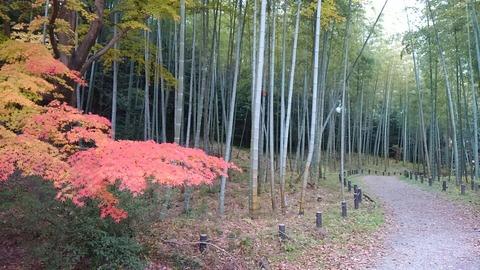 29年11月27日森林公園⑤
