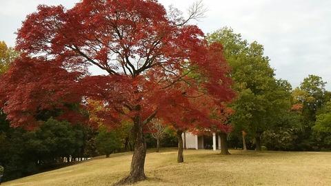 29年11月27日森林公園④