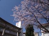 三輪神社20140323