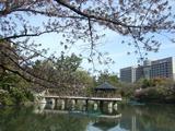 鶴舞公園竜ヶ池