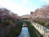 山崎川20120404
