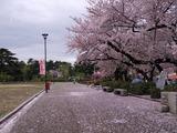 鶴舞公園・テニスコート横2013/04/03