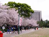 鶴舞公園20130403