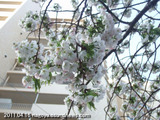 大須公園2011.04.16