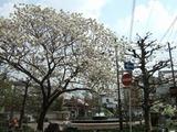 大須公園20120419