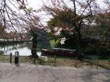 彦根城二季咲桜