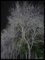 白い木!!