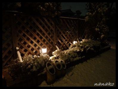 雪だよ〜〜〜雪!!