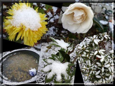 庭の冬景色