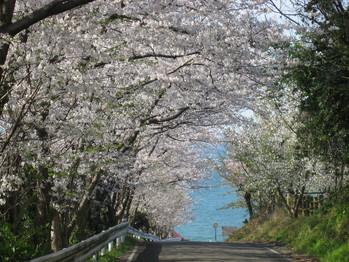 桜090325 007