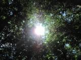 blogIMG_4098(太陽)