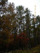 blog2009_1024アサヒ中日森林整備0029