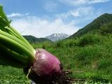 ブログ用:赤かぶ&御嶽山