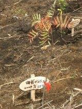 blog2008_0906休暇村葵の森植樹祭0066☆