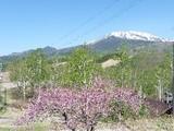桜&新緑&御嶽山