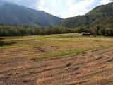 滝越そば畑2