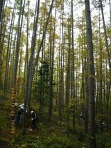 blog2009_1024アサヒ中日森林整備0013