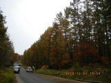 blog2009_1024アサヒ中日森林整備0057
