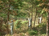 2008_1030半田市林業体験0014