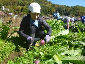 「春の王滝かぶ収穫体験」開催のお知らせ