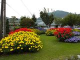 ブログ王滝小学校花壇2