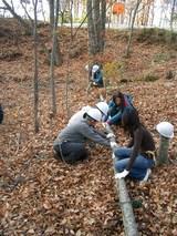 blog2008_1107ガイア林業体験0014