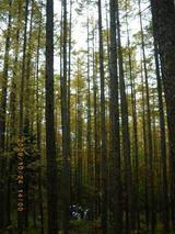 blog2009_1024アサヒ中日森林整備0025