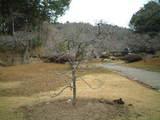2009_0210散歩0009