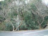 2009_0210散歩0012