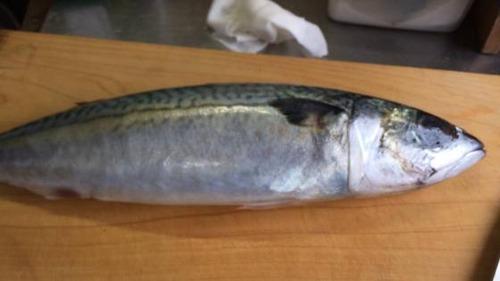 【画像あり】ワイ、しめ鯖をつくる